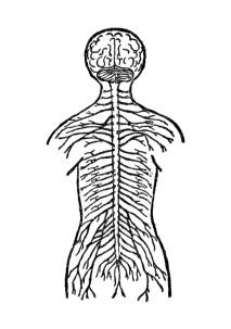nervous-system-pv